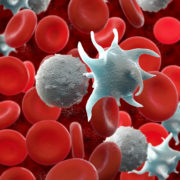 red blood cells,activated platelet and white blood cells microscopic photos